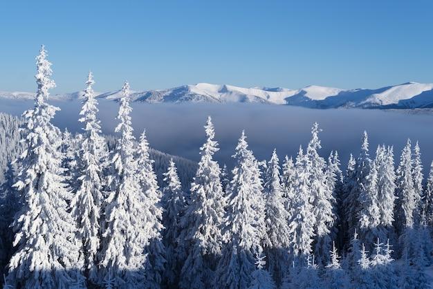 Floresta de abetos nevados nas montanhas. paisagem de inverno em um dia ensolarado e gelado com montanhas cobertas de neve e céu azul