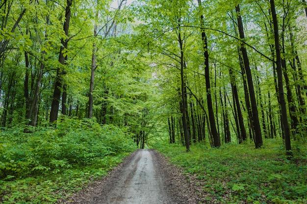 Floresta de árvores com passarela
