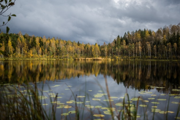 Floresta de árvores de outono amarelas refletindo no lago calmo