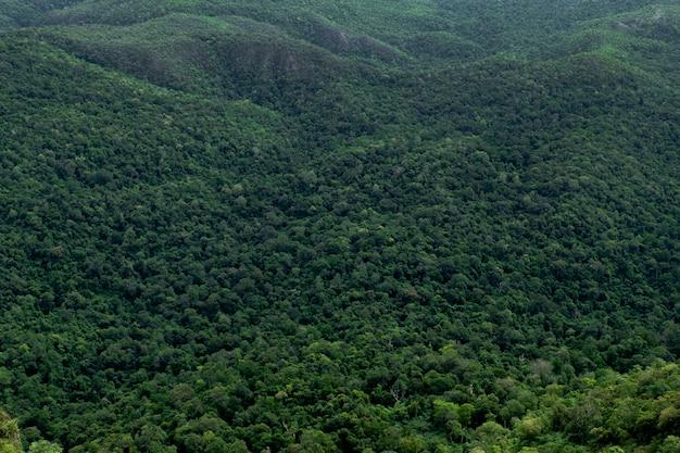 Floresta de árvores verdes na montanha