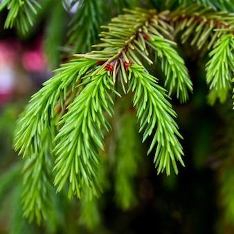 Floresta de árvores verdes