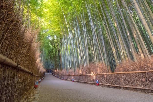 Floresta de bambu da natureza bonita na estação do outono em arashiyama em kyoto, japão.
