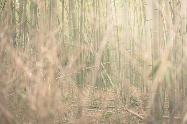 Floresta de bambu e grama de prado verde com luz natural.