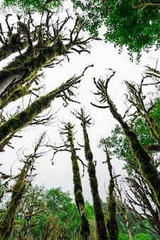 Floresta de buxo. rize - turquia