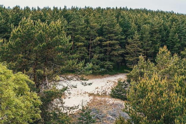 Floresta de coníferas, abetos e pinheiros crescem em solo arenoso.