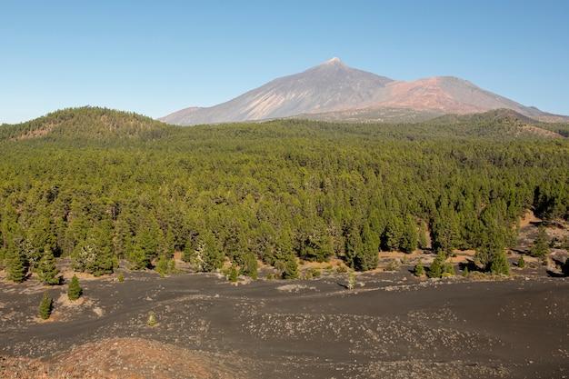 Floresta de coníferas com pico de montanha