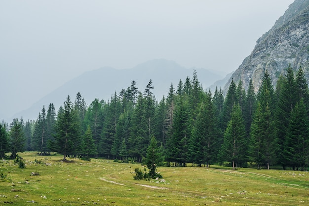 Floresta de coníferas de borda e rochas