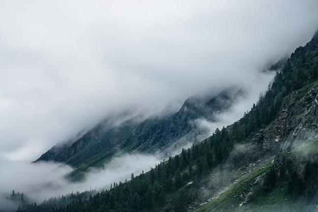 Floresta de coníferas na encosta da montanha entre nuvens baixas.