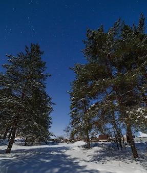 Floresta de coníferas na superfície do céu com estrelas