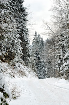Floresta de coníferas nevadas de inverno à tarde. quadro vertical.