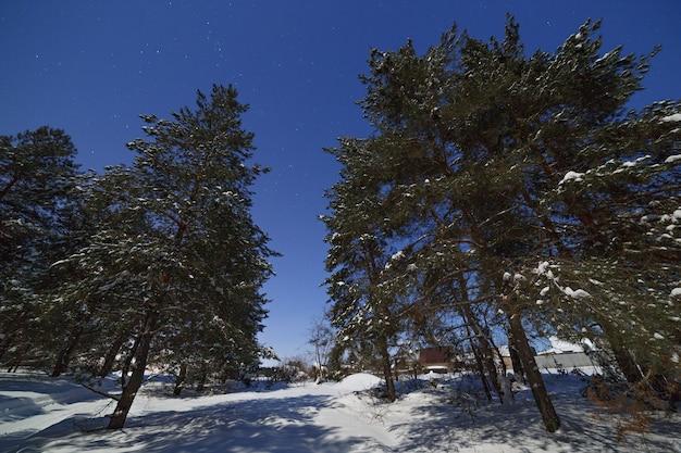 Floresta de coníferas no fundo do céu com estrelas