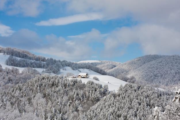 Floresta de folhagens coberta por neve no inverno