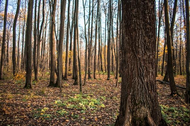 Floresta de folhas de outono cai
