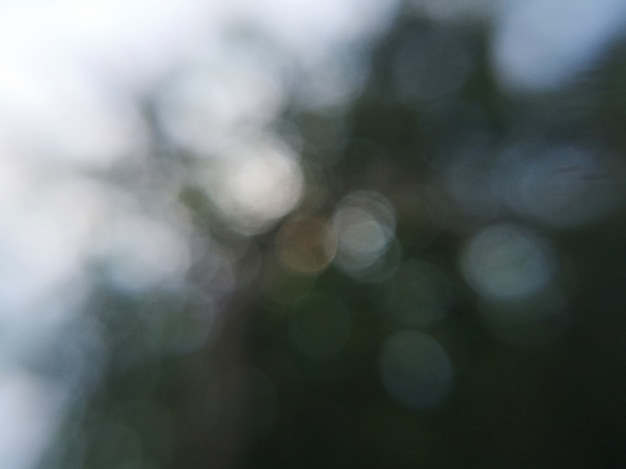 Floresta de folhas verdes escuras turva fundo abstrato com bokeh branco