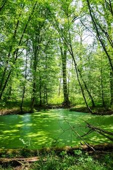 Floresta de fontainebleau na frança