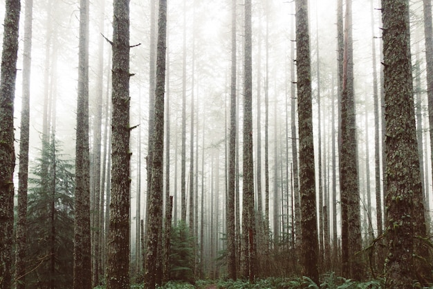 Floresta de grandes árvores