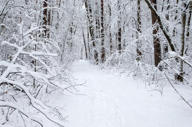 Floresta de inverno bonito e a estrada