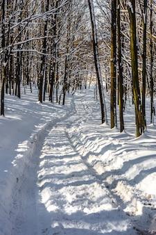 Floresta de inverno bonito