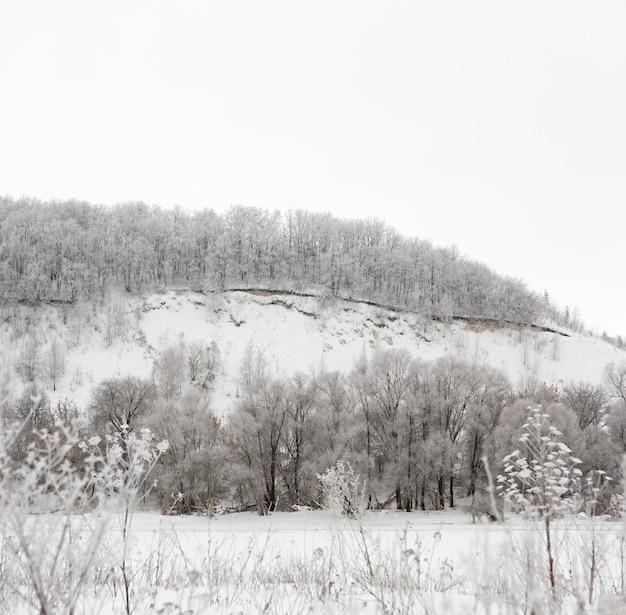 Floresta de inverno coberta de geada no meio