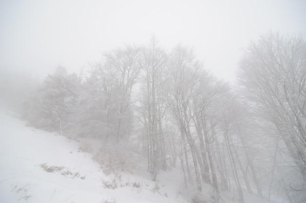 Floresta de inverno coberta de neve. tempo de nevoeiro. má visibilidade.