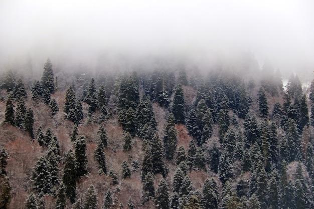 Floresta de inverno coberta de névoa em uma montanha do cáucaso