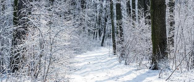 Floresta de inverno com árvores cobertas de neve e arbustos com tempo ensolarado, estrada na floresta de inverno