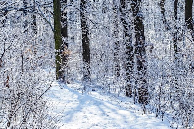 Floresta de inverno com árvores cobertas de neve e tempo ensolarado, vista para o inverno
