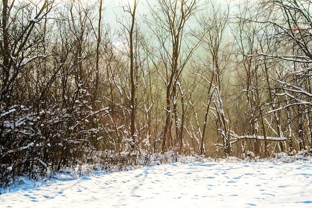 Floresta de inverno com árvores cobertas de neve e tempo ensolarado