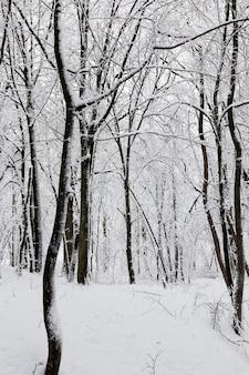 Floresta de inverno com árvores sem folhagem