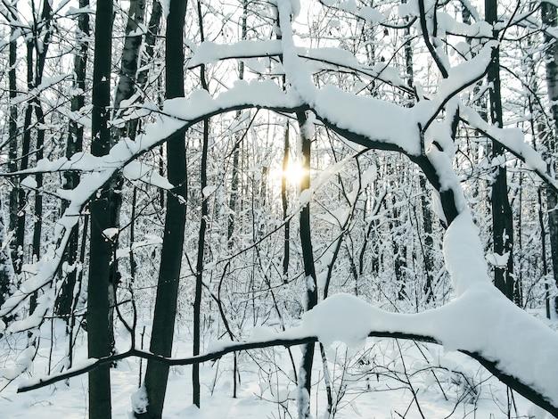 Floresta de inverno com galhos cobertos de neve
