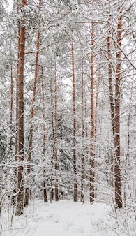 Floresta de inverno com neve coberta de neve, galhos de árvores e arbustos