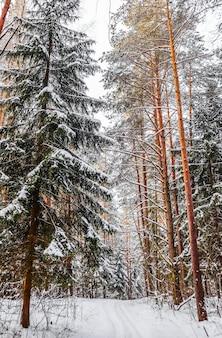 Floresta de inverno com neve em uma estrada de neve branca de dia ensolarado com uma pista de esqui coberta de árvores e arbustos