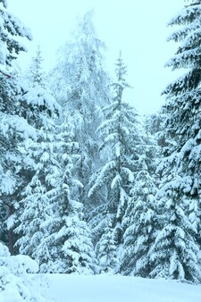 Floresta de inverno com pinheiros nevados (áustria).