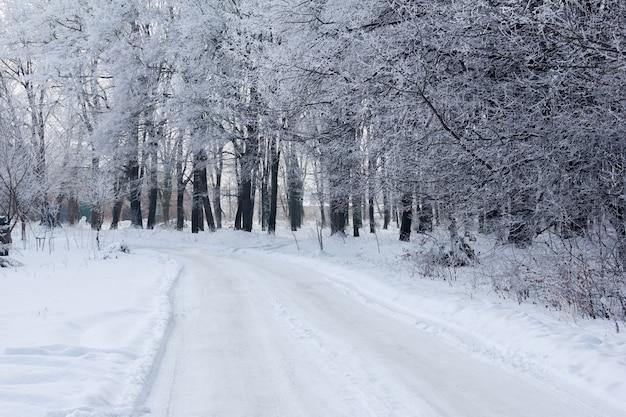 Floresta de inverno com uma trilha e casa