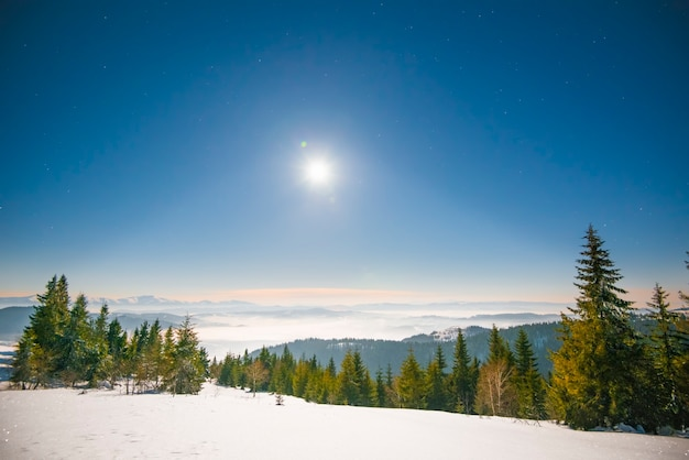 Floresta de inverno de abetos com vista para as montanhas