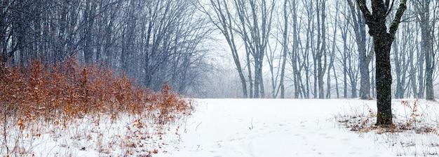 Floresta de inverno durante uma nevasca, prado na floresta de inverno