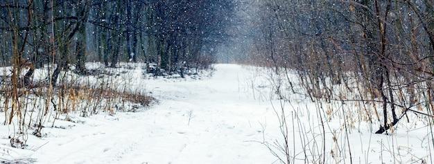 Floresta de inverno durante uma nevasca. queda de neve na floresta de inverno