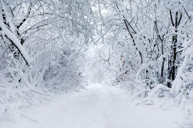 Floresta de inverno e a estrada