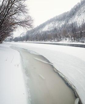Floresta de inverno nas margens do rio don