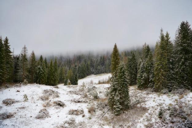 Floresta de inverno nas montanhas, árvores cobertas por névoa, neve em primeiro plano