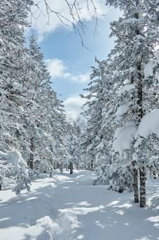 Floresta de inverno nas montanhas, toda coberta de neve, manhã gelada. pinho e abeto congelados. ruído, grão, fora de foco
