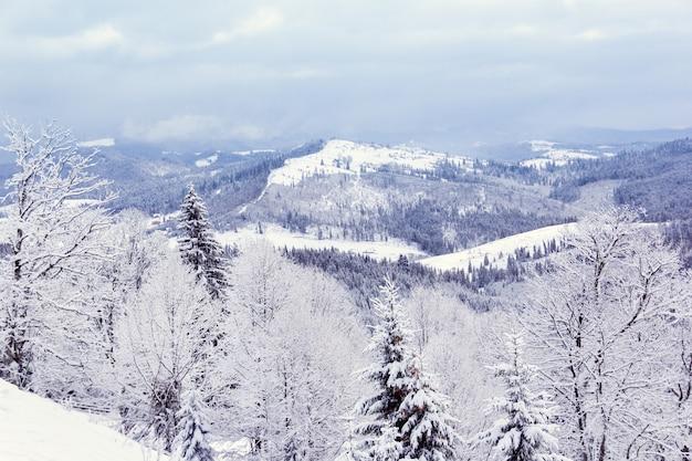 Floresta de inverno nas montanhas