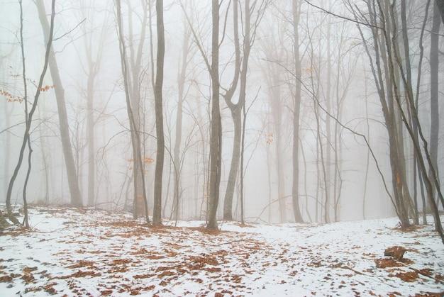 Floresta de inverno nevado no nevoeiro denso.
