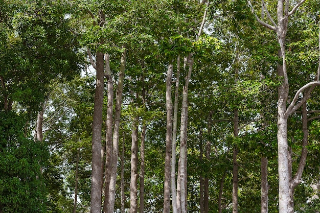 Floresta de inverno verde.