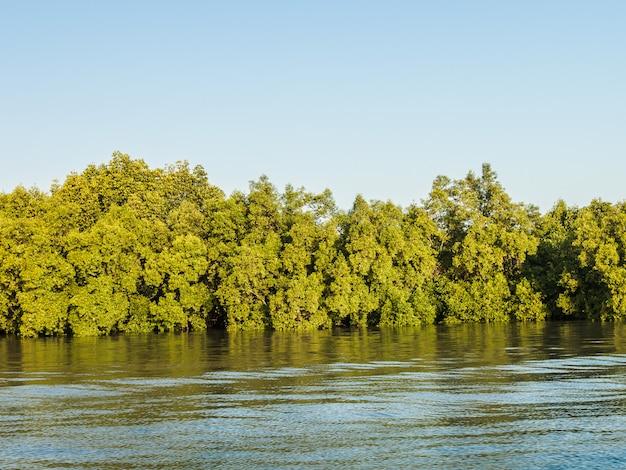 Floresta de mangroove no golfo da tailândia