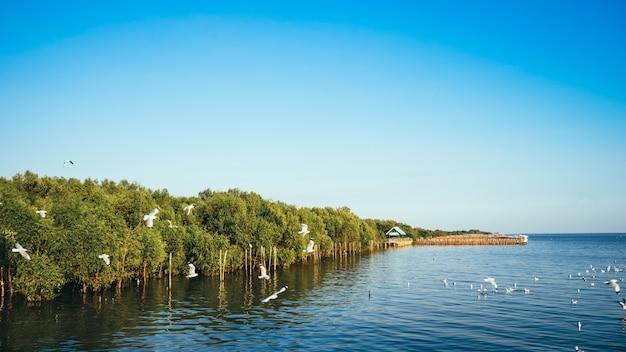 Floresta de mangue com gaivotas