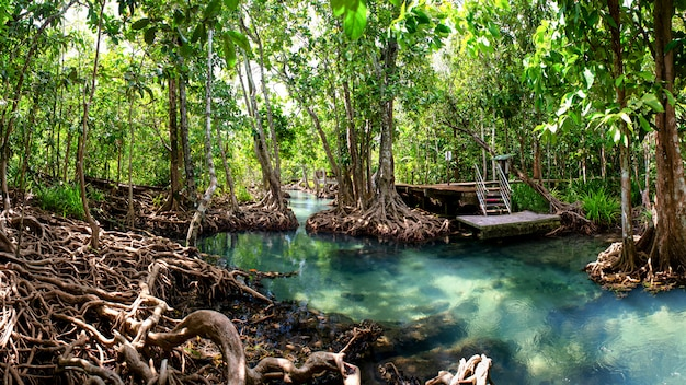 Floresta de mangue krabi tailândia