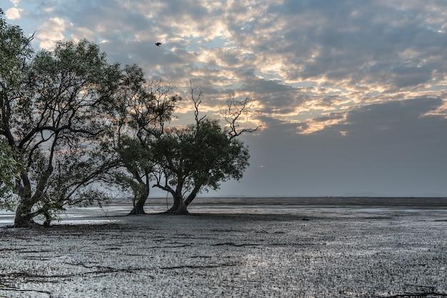 Floresta de mangues linda no litoral na maré baixa do mar de andaman, tailândia