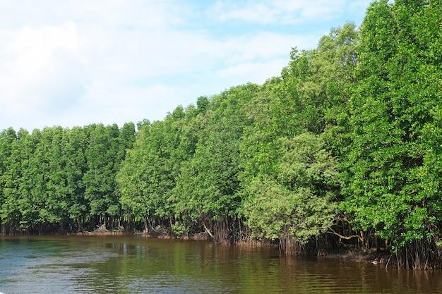Floresta de manguezais na província de chanthaburi, tailândia