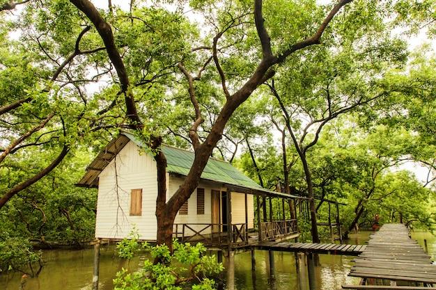 Floresta de manguezais no golfo da tailândia